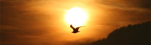 bird-flying-sunrise-background